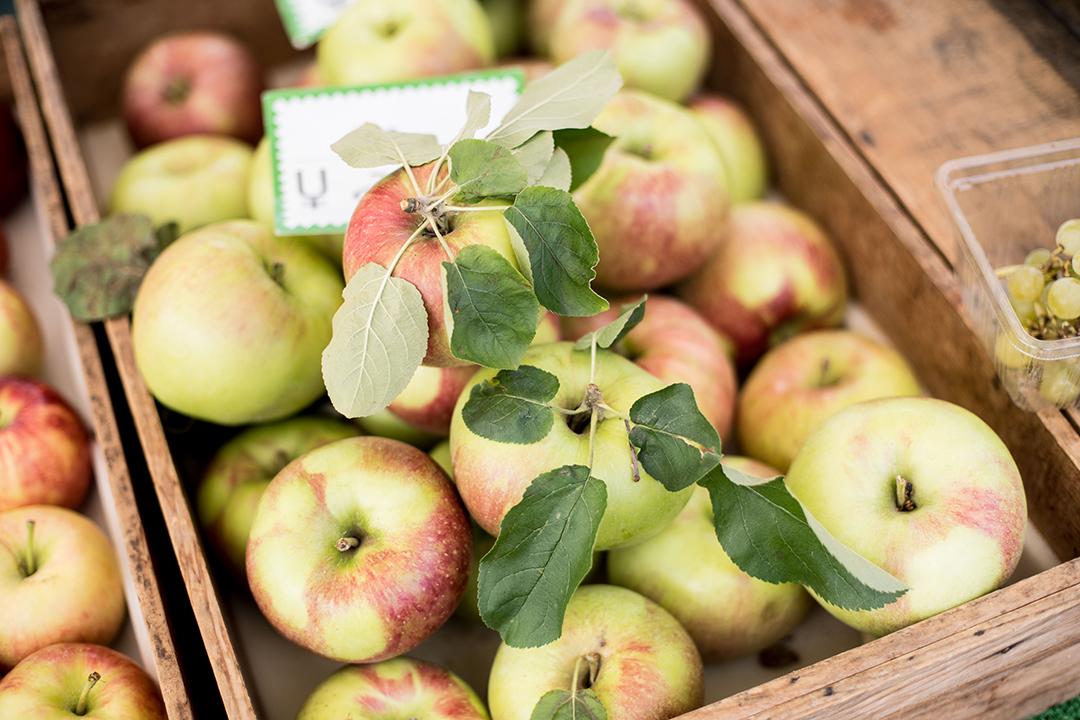 apple in japan - Condé Nast Traveller - Beatriz Janer - 8 Artist Management