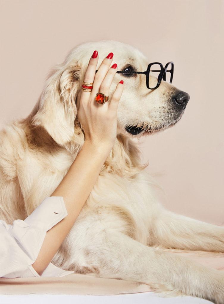 Ópticas Meye - dogs - Andrea Bielsa - 8 Artist Management