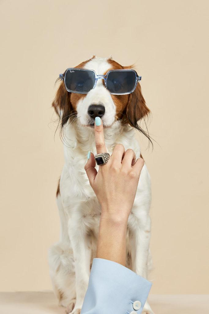 dogs - Chic Pets - Andrea Bielsa - 8 Artist Management